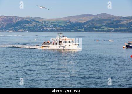 Seacoast Safaris boat Neptune Explorer off the coast of Anglesey at Penmon Point taking tourists on a cruise from Beaumaris to Puffin Island - Stock Photo