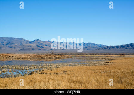 USA, Nevada, Churchill County, Stillwater National Wildlife Refuge. A field of golden grasses covering this seasonally inundated wetland. - Stock Photo