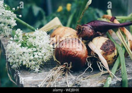 Close-up Of Raw Onions With Flowers On Old Table - Stock Photo