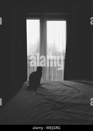 Cat Looking Through Window At Home - Stock Photo