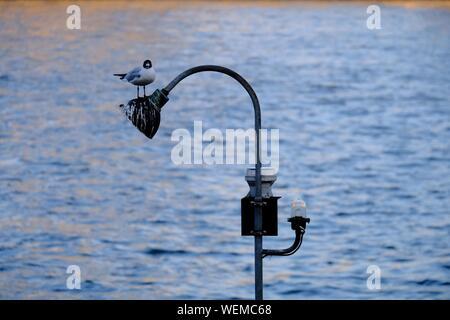 Bird Perching On Lamp Post Against Sea - Stock Photo