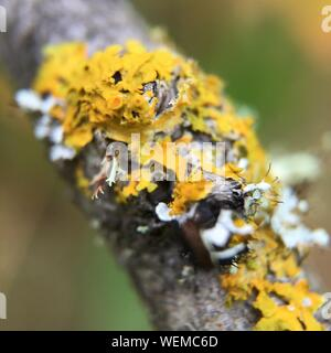 Close-up Of Bee On Flower - Stock Photo