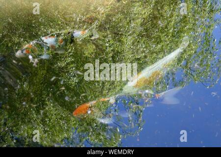 Full Frame Shot Of Colorful Fish In Water