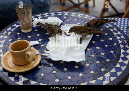 Sparrows Feeding On Table Outdoors - Stock Photo