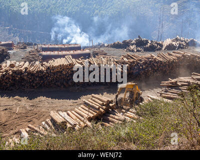 Forestry Industry And Stack Of Logs In Swaziland - Stock Photo