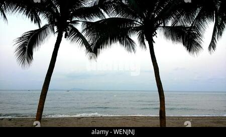 View Of Palm Trees On Calm Beach - Stock Photo