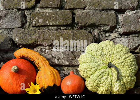 Colorful glowing pumpkins stand in front of a gray brick wall in the fall as background - Stock Photo