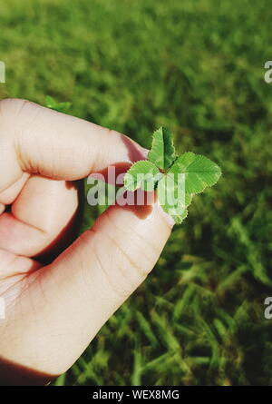 Cropped Hand Holding Four Leaf Clover On Field - Stock Photo