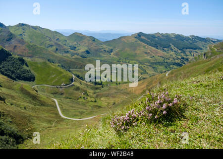 Beautiful wildflowers in the foreground of a gorgeous mountain landscape at Alto Valle del Miera, Cantabria, Spain