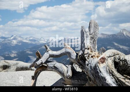 Eroded Wood Against Mountains At Yosemite National Park - Stock Photo