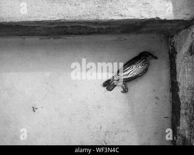High Angle View Of Dead Bird - Stock Photo