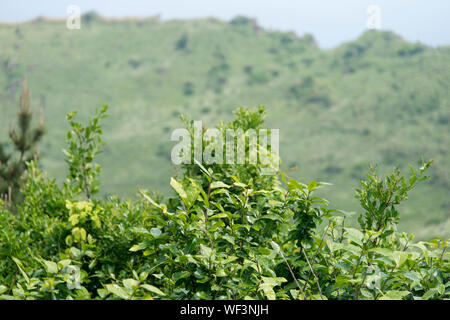 Plants Growing Against Mountain Background At Seongsan Ilchulbong On Jeju Island - Stock Photo