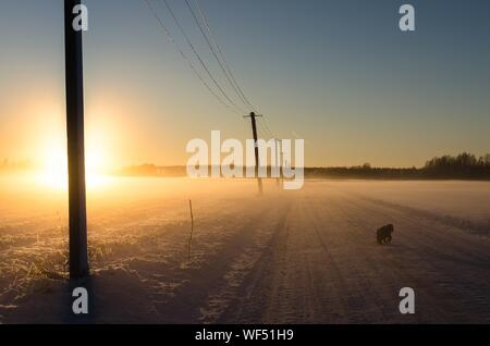 Silhouette Dog By Power Lines On Snow Covered Field During Sunset - Stock Photo