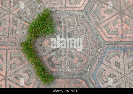 Top view of the paving slabs in the form of a rhombus with green grass making its way across the street. Nature conquers people. - Stock Photo