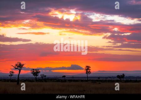 Sunrise over the Masai Mara, Kenya. Trees silhouetted against the hills of the Oldoinyio escarpment (also called Oloololo or Siria Escarpment), in the - Stock Photo