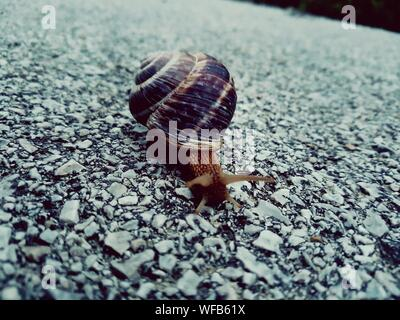 Close-up Of Snail On Stone Path - Stock Photo