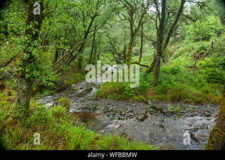 River running through a forest, Isle of Arran, Scotland, United Kingdom - Stock Photo