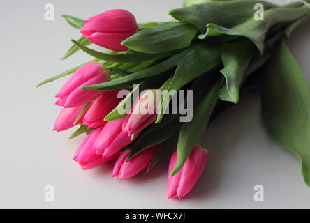 Close-up Of Pink Tulips On White Background - Stock Photo