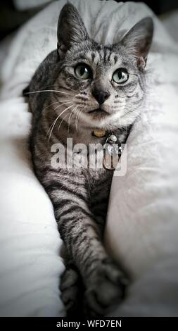 Close-up Of Tabby Cat Lying On Bed At Home - Stock Photo