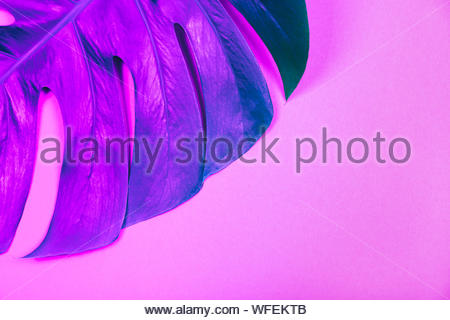 Creative  blue-green neon gradient tropical plant green monstera leaf on pink background. Trendy summer and tropical concept. Place for text. - Stock Photo