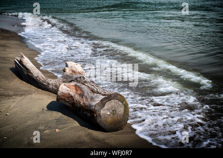 Tree trunk on the seashore - Stock Photo