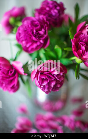 Bouquet of dark pink peonies flowers in a vase - Stock Photo