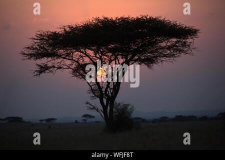 Late evening sunset - Kenya - Stock Photo