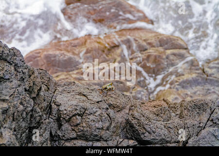 High Angle View Of Crab On Rocky Shore - Stock Photo