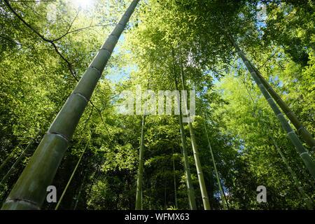 Bamboo forest on the outskirts of Kyoto in Arashiyama