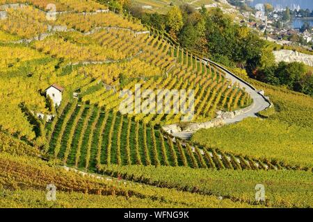 Switzerland, Canton of Vaud, Lavaux Vineyard Terraces listed as World Heritage by UNESCO, it extends from Montreux to Lausanne on 32km along Lake Geneva and 850ha - Stock Photo