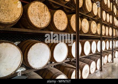 Shelves with oak rum barrels - Stock Photo