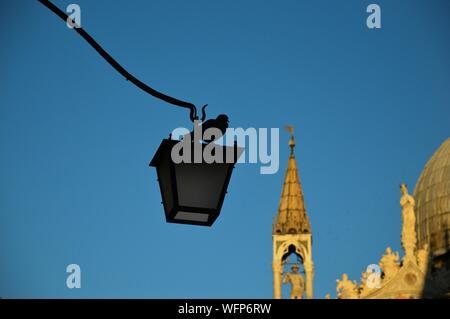 Low Angle View Of Bird Perching On Lamp Post Against Clear Blue Sky In City - Stock Photo