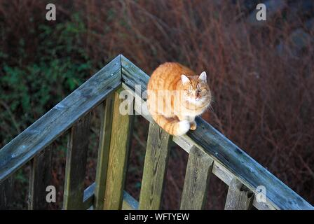 High Angle View Of Cat Sitting On Railing In Back Yard - Stock Photo
