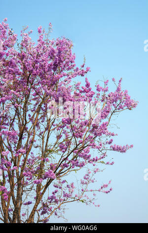 Low Angle View Of Purple Flowering Tree Against Clear Sky - Stock Photo