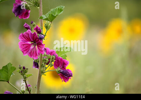 Close-up Of Honey Bee On Purple Flower - Stock Photo