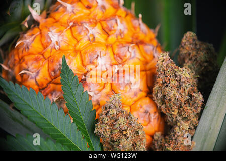Detail of dried cannabis buds (Green Crack strain) with pineapple plant and fruit - medical marijuana concept background - Stock Photo
