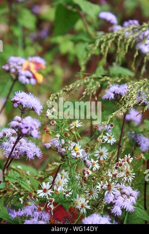 Close-up Of Purple Flowering Plants And Daisies In Forest - Stock Photo