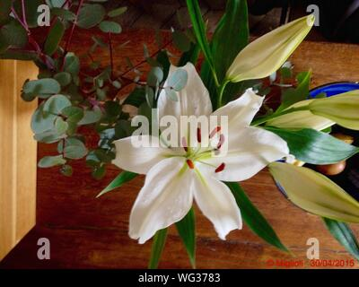 Directly Above Shot Of White Lily Flowers In Vase - Stock Photo