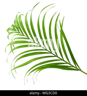 Palm fronds waving in the wind, isolated - Stock Photo