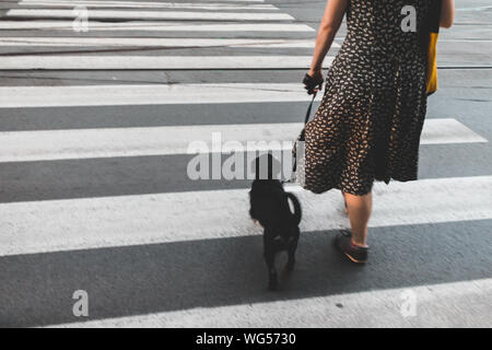 Low Section Of Woman Walking With Dog On Zebra Crossing - Stock Photo