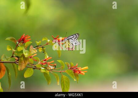 Wonderful Butterfly on a Flower