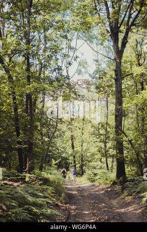 Man And Woman Walking With Dog In Forest - Stock Photo