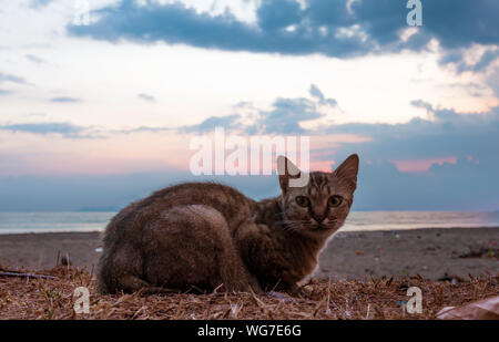 Portrait Of Cat Resting At Beach During Sunset - Stock Photo