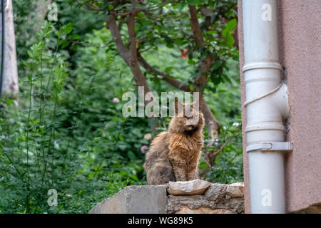Stray cat with orange fur sits on step - Stock Photo