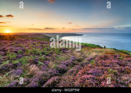 Summer heather in bloom on the North York Moors national park at Ravenscar and looking out to Robin Hood's Bay