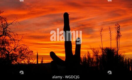 Low Angle View Of Silhouette Saguaro Cactus Against Cloudy Sky During Sunset - Stock Photo