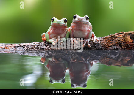 Close-up Of Frogs On Fallen Tree Over Pond - Stock Photo