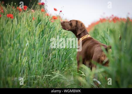 Dog On Field - Stock Photo