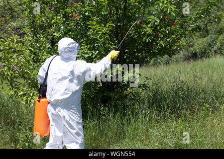 Rear View Of Male Worker In Protective Workwear Spraying Insecticide On Plants - Stock Photo