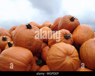 Close-up Of Pumpkins Stack Against Sky - Stock Photo